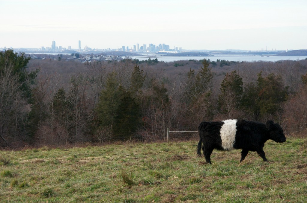 boston skyline from wier river farm